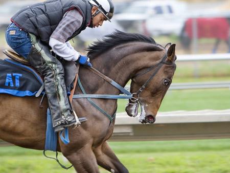 Ratgeber Pferdewetten